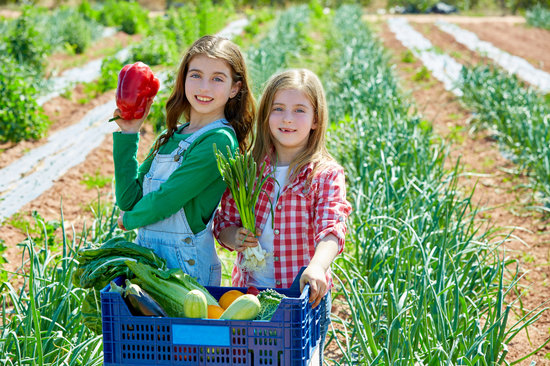 Unique Ideas to Get Your Child to Eat Vegetables