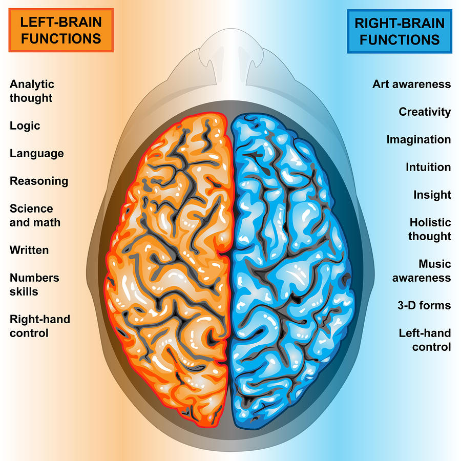 bigstock-Human-brain-left-and-right-fun-27911288